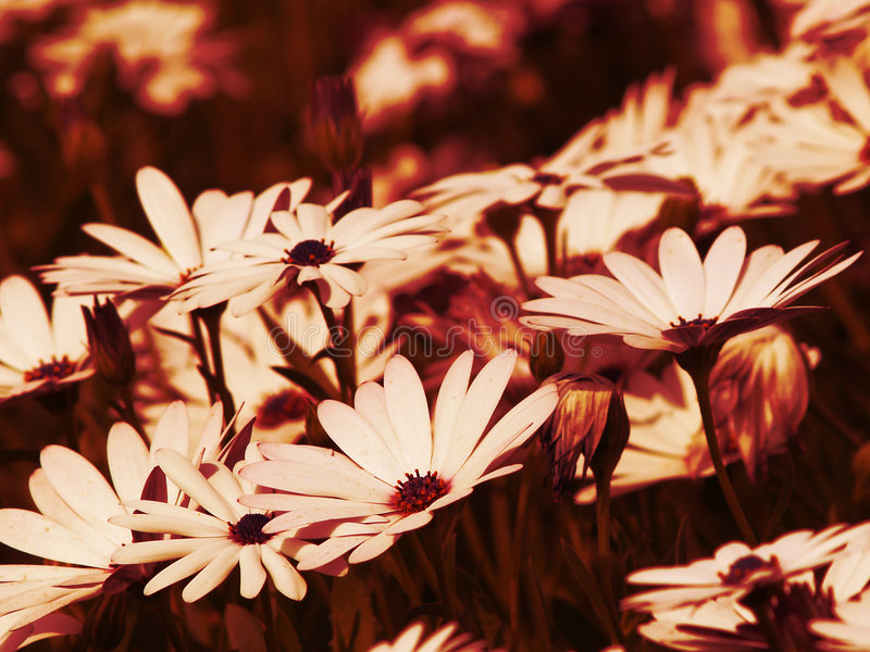 Abstract Flowers stock photography