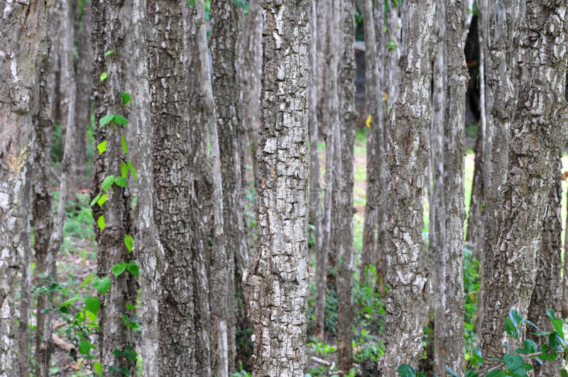 Abstract forest. Close up at plant stalk stock image