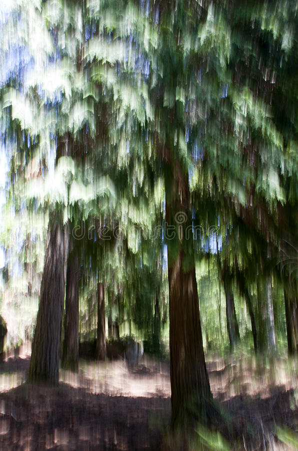 Download Abstract Forest Royalty Free Stock Photography - Image: 19929537