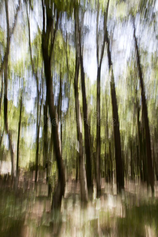 Abstract Forest. Abstract Nature Landscape Background Motion Blur Effect Forest Texture with green smeared colors royalty free stock image