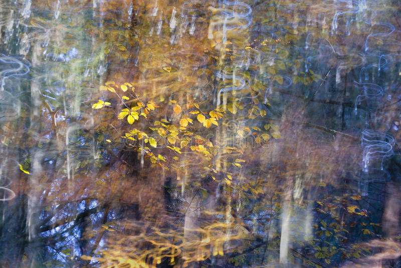 Abstract forest. Abstract picture of a forest with some blurred lights and the golden leaves of an autumnal forest royalty free stock image
