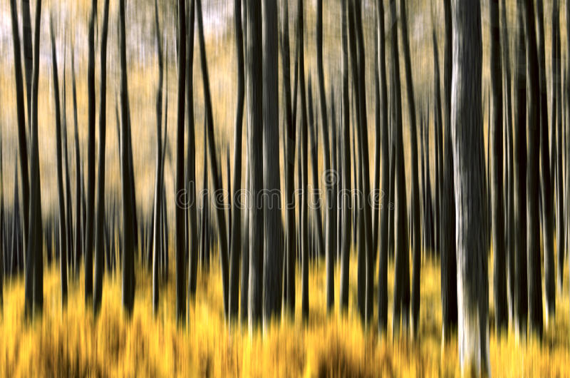 Abstract Forest royalty free stock images