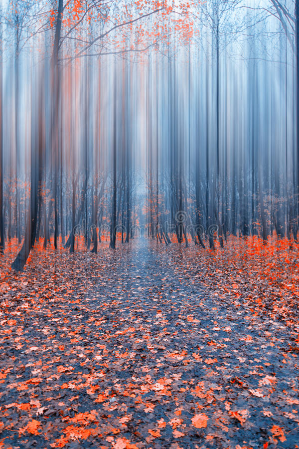 Abstract forest. In autumn time royalty free stock images