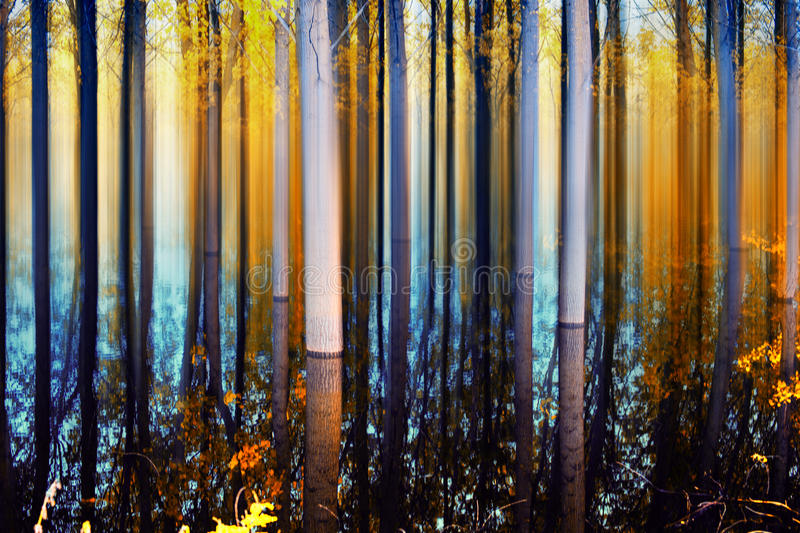 Abstract Forest in autumn time royalty free stock photo