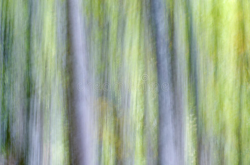 Abstract forest. Abstract beech forest scene in autumn, Irati Jungle, Pyrenees, Navarra, Spain royalty free stock photography