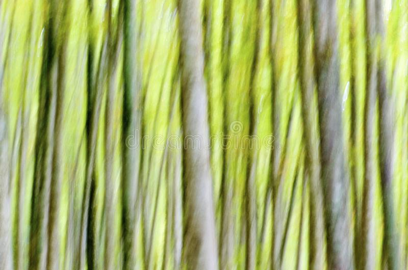Abstract forest. Abstract beech forest scene in autumn, Irati Jungle, Pyrenees, Navarra, Spain stock photography
