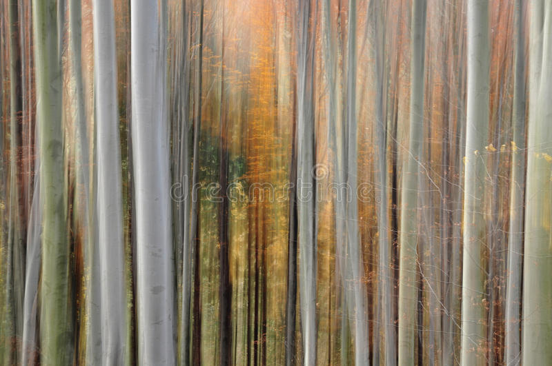 Abstract forest blur stock photography