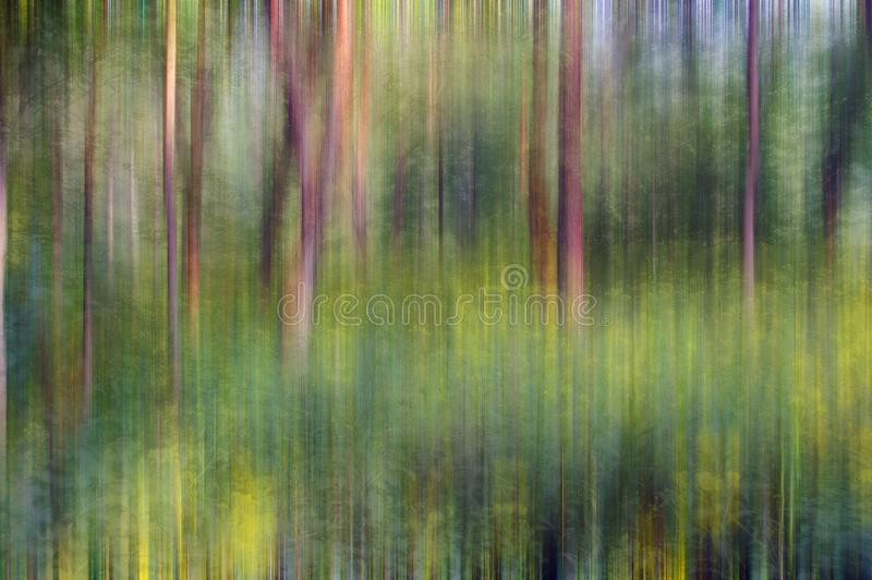 Abstract forest. Scene with blurred trees and wildflowers royalty free stock photography