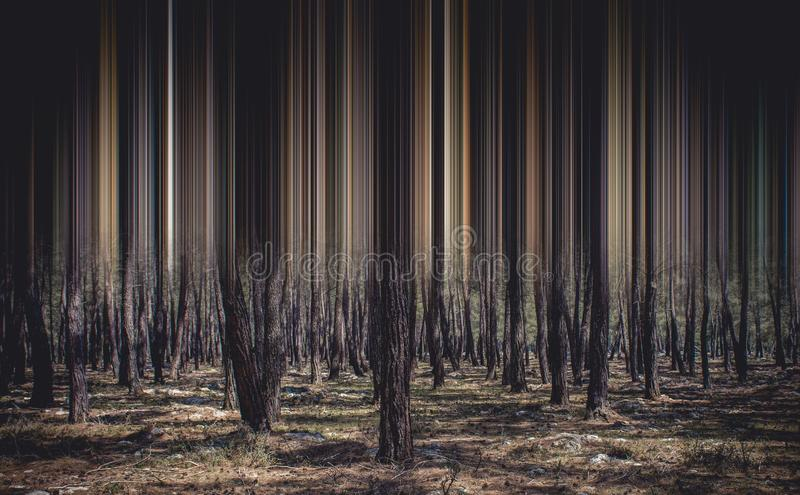 Abstract forest and trees for background stock image