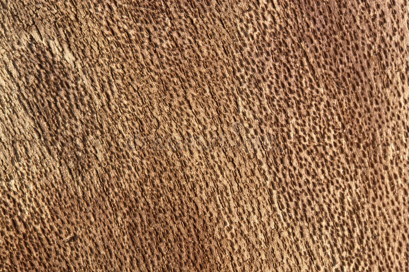 Download Inside bark detail stock image. Image of level, protection - 30312239