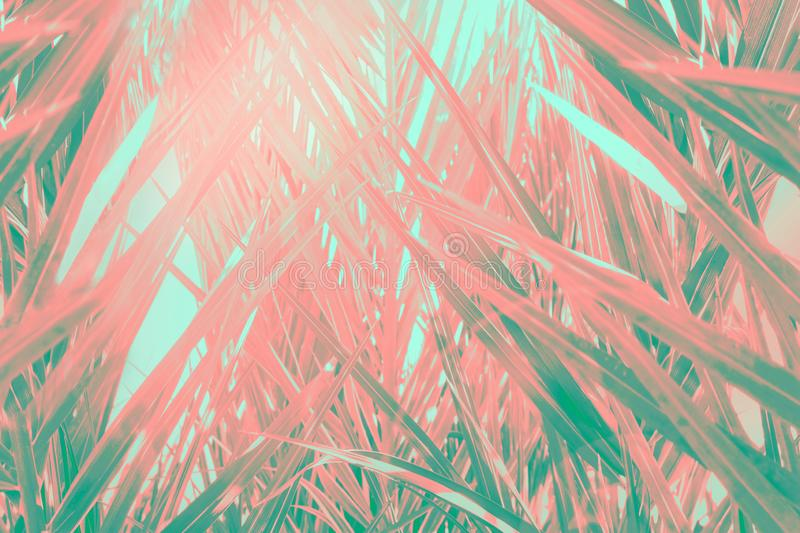 Abstract futuristic tropical background. Coppice of palm trees with long dangling spiky leaves pattern. Green teal pink gradient royalty free stock image