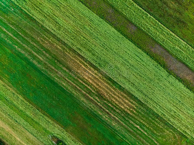 Abstract geometric shapes of agricultural parcels of different crops in green and yellow colors. Aerial top down view of farmlands stock images