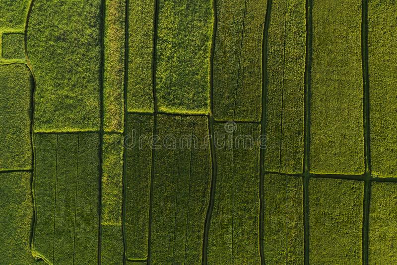 Abstract geometric shapes of rice fields in green. Abstract geometric shapes of agricultural parcels in green color..Bali rice fields. Aerial view shoot from stock photo