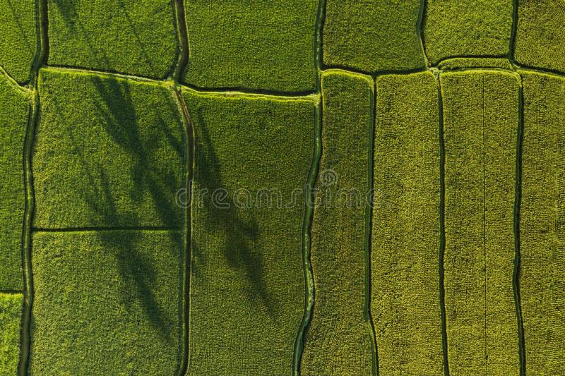 Abstract geometric shapes of rice fields in green. Abstract geometric shapes of agricultural parcels in green color..Bali rice fields. Aerial view shoot from stock image
