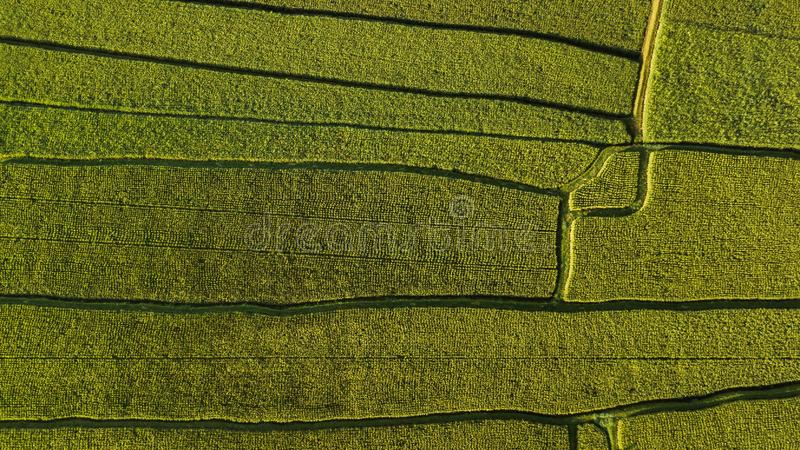 Abstract geometric shapes of rice fields in green royalty free stock photography