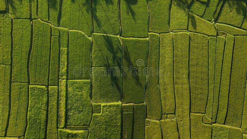 Abstract geometric shapes of rice fields in green. Abstract geometric shapes of agricultural parcels in green color..Bali rice fields. Aerial view shoot from royalty free stock images