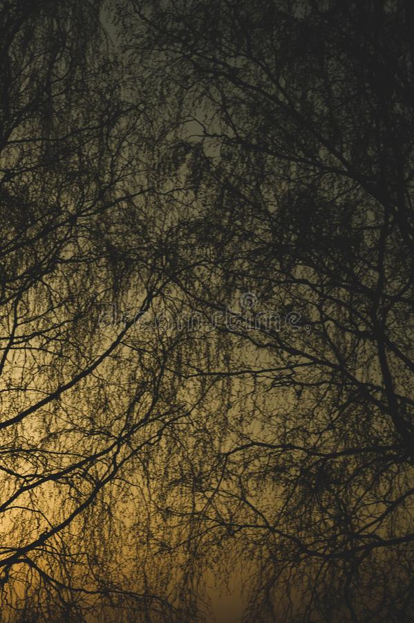 Abstract golden forest texture background. tree branches silhouette stock photography