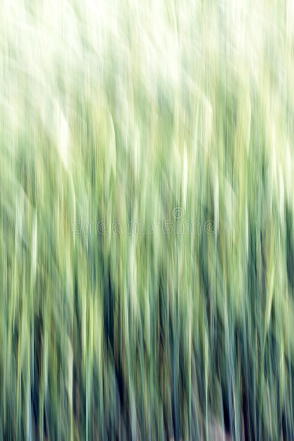Abstract Grain Background. Abstract Background on grain field royalty free stock photo