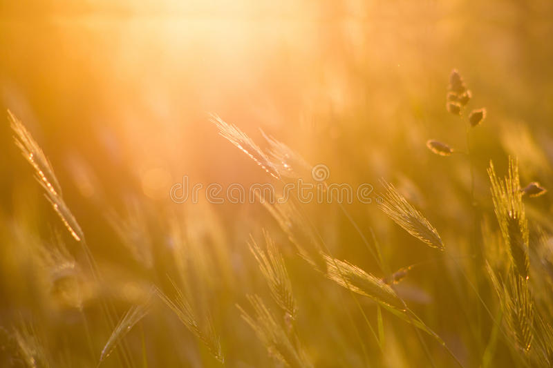 Abstract grass spring or summer backgound. Abstract grass nature spring or summer backgound royalty free stock photos