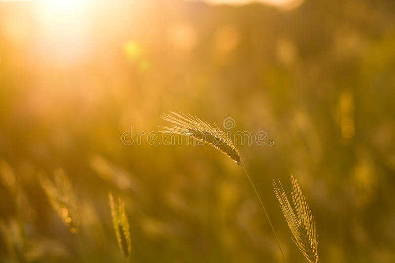 Abstract grass spring or summer backgound. Abstract grass nature spring or summer backgound royalty free stock images