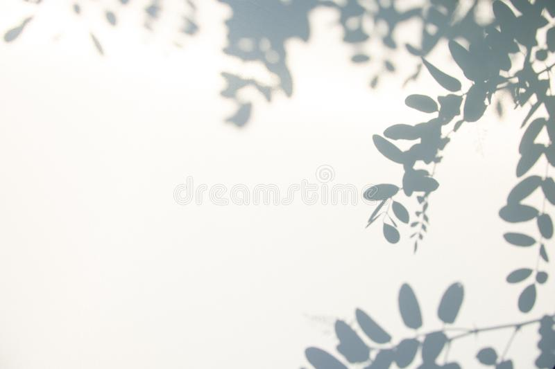 Abstract gray shadow background of natural leaves on white texture for background. And wallpaper stock image