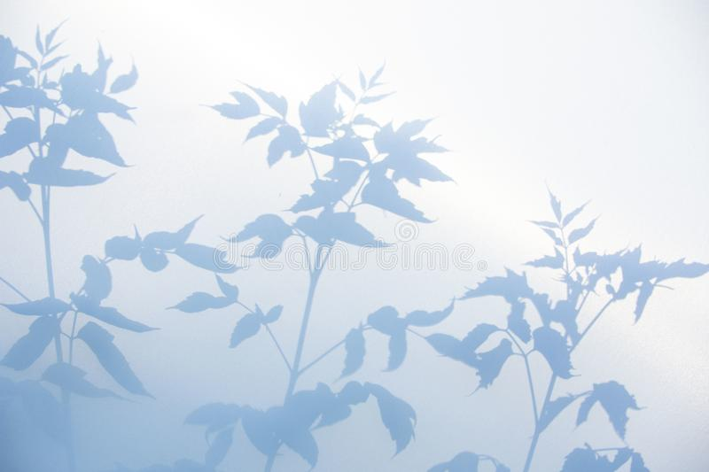 Abstract gray shadow background of natural leaves on white texture for background. And wallpaper royalty free stock photo