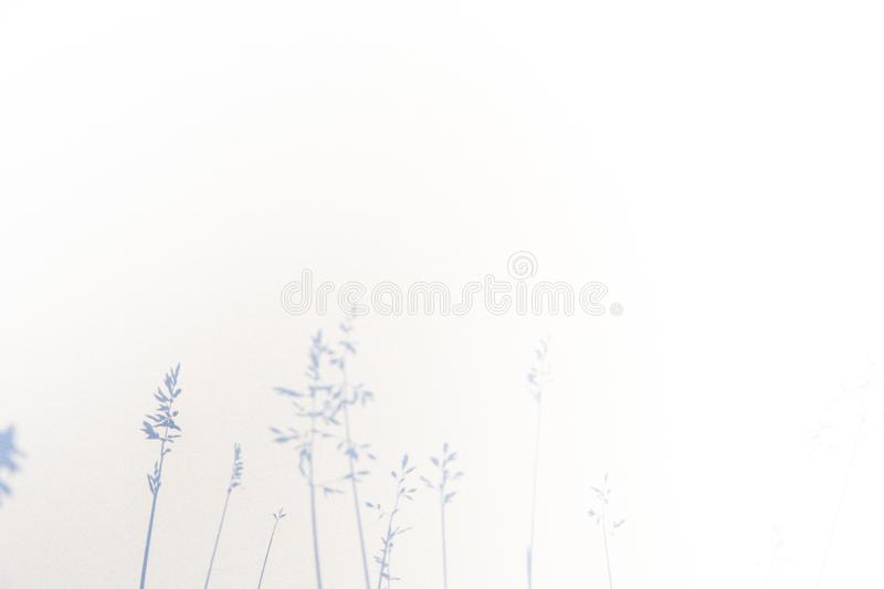 Abstract gray shadow background of natural leaves on white texture for background stock photography