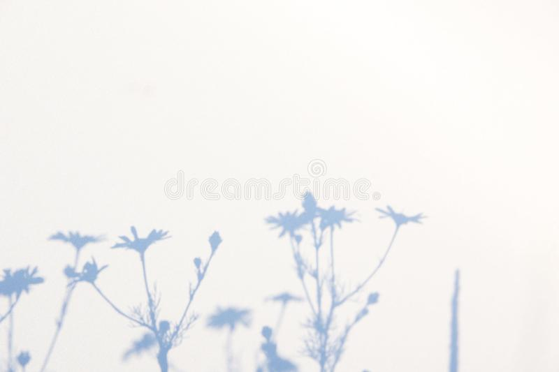 Abstract gray shadow background of natural leaves on white texture for background stock images