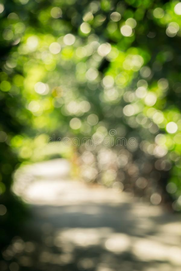 Abstract green bokeh blur nature forest path background stock photography