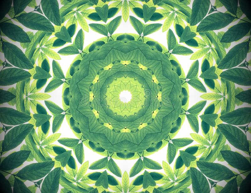 Abstract green color nature background, tropical green leaves wi. Th kaleidoscope effect, mandala flora pattern stock photo