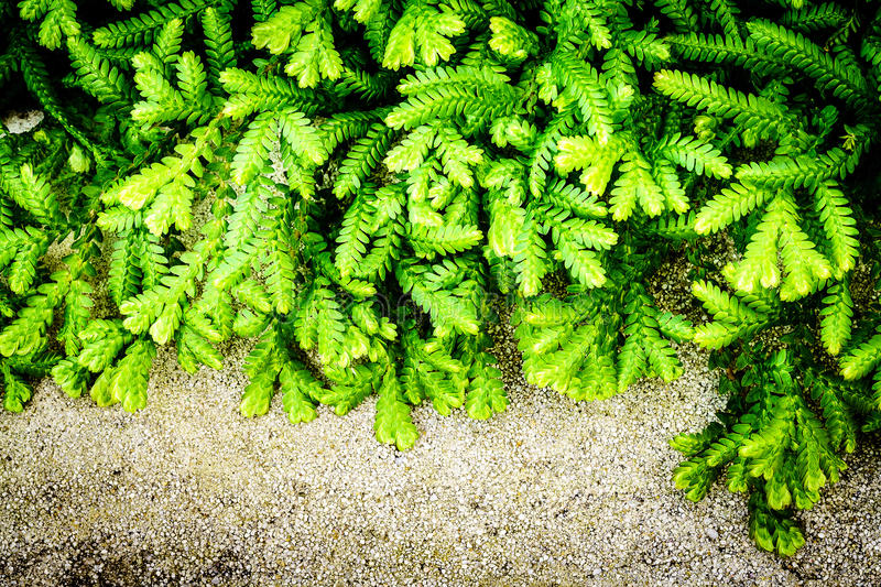 Abstract green fern leaves background stock images