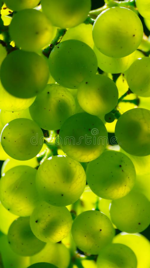 Abstract Green Grapes stock images