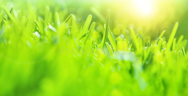 Abstract green grass background. Soft focus, sunny day, fresh spring field, natural textured wallpaper stock image