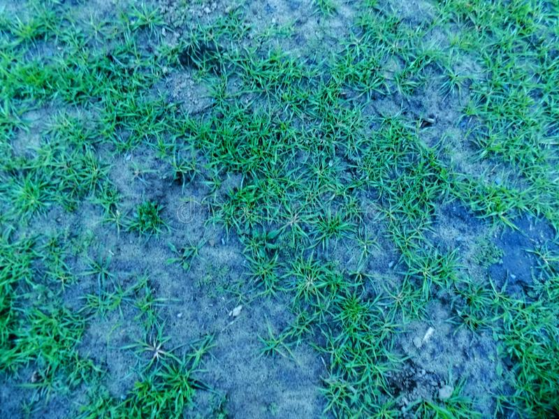 Abstract Green Grass Texture Background On The Black Mystic Ground Dark Nature Wallpaper Backgrounds