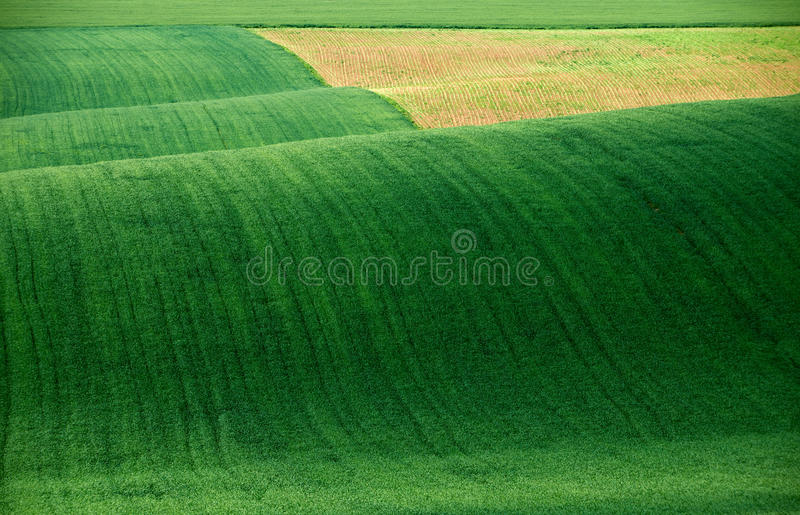 Abstract green landscape stock photo