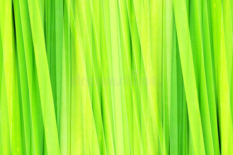 Abstract green leaf royalty free illustration