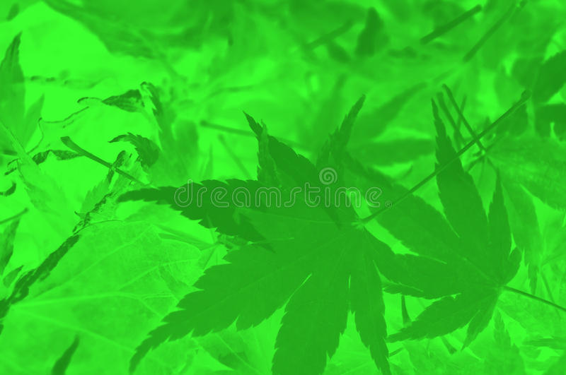Abstract green leaf background. royalty free stock photos
