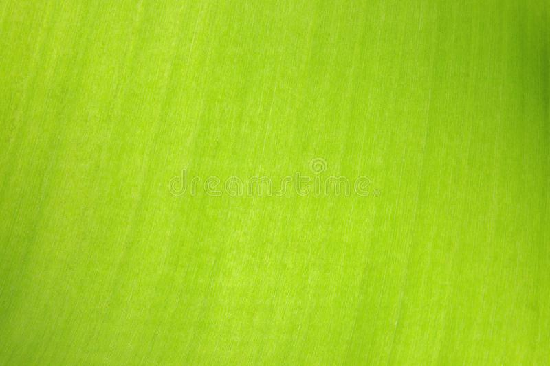 Abstract green leaf background with detail stock image