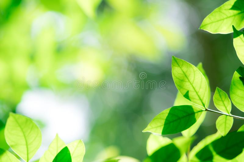 Abstract green leaf on blurred greenery background in garden with copy space for your text royalty free stock photography