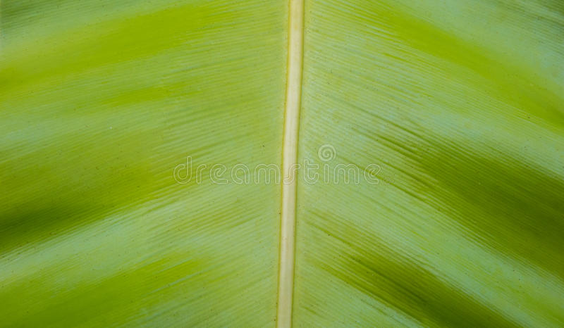 Abstract green leaf texture background.  stock images