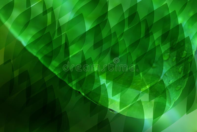 Abstract Green leafs.Green leaves are the background. royalty free stock photos