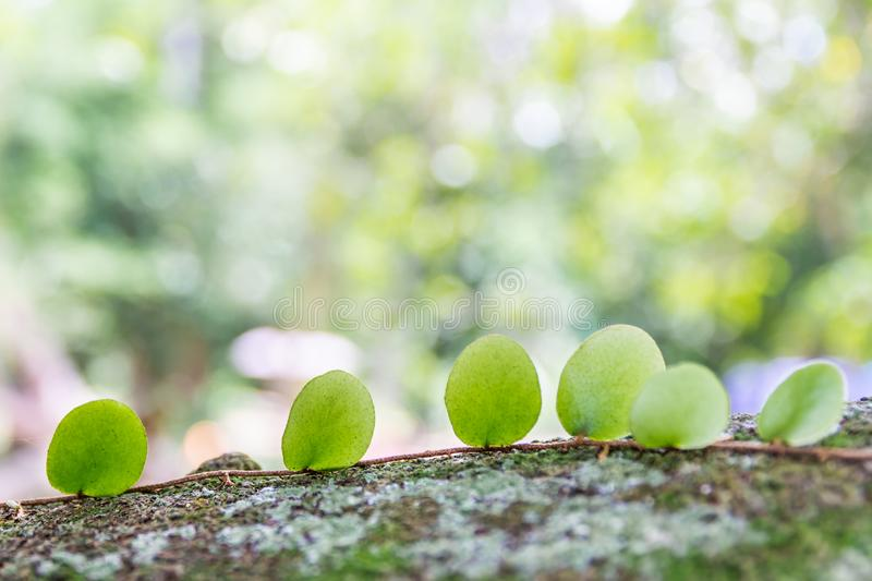 Abstract Green leaves and bokeh background stock photo