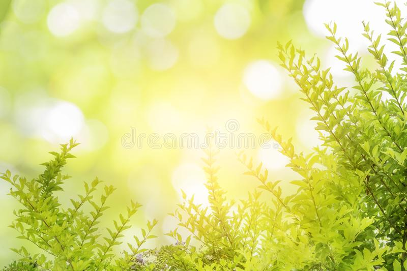 Abstract Green leaves and water drops pattern background royalty free stock photos