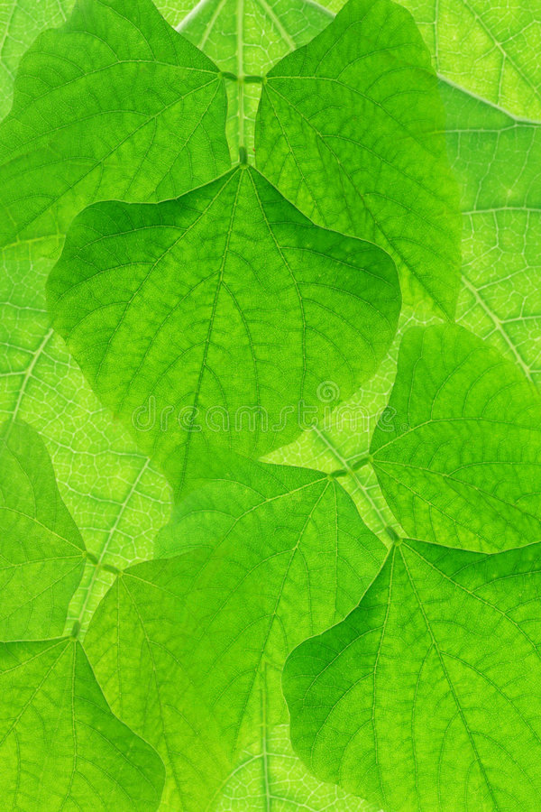 Abstract green leves background stock photos