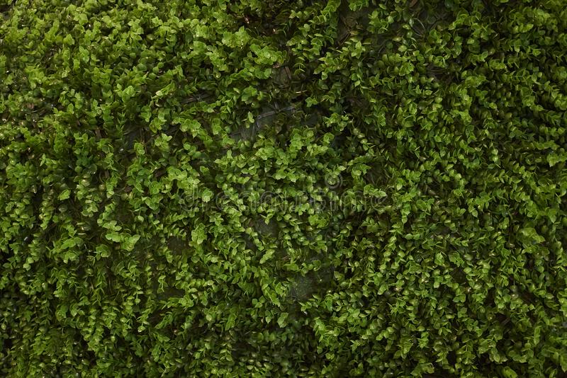 Abstract green plants texture background, close-up, top view royalty free stock photo
