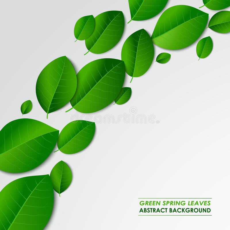 Abstract green spring leaves background vector illustration