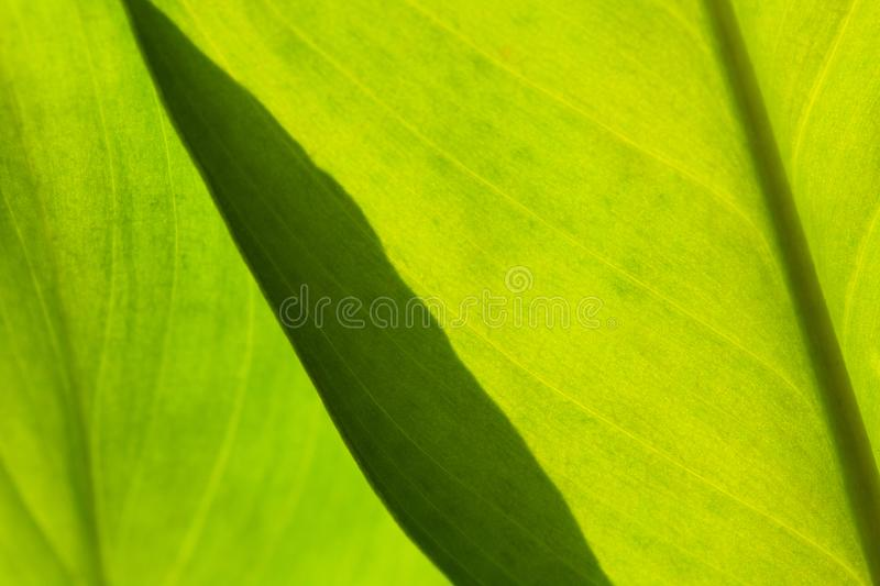 Abstract green striped nature background, vintage tone. green textured leaf of the plant. natural eco background royalty free stock photography