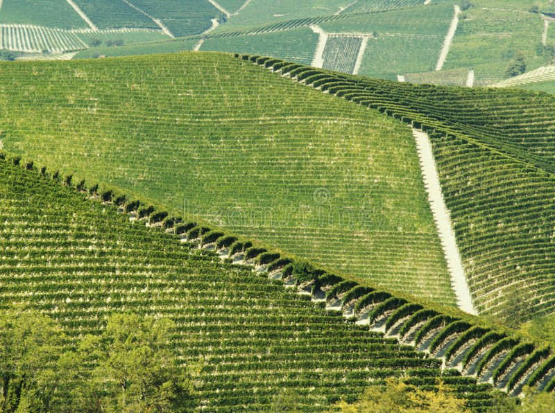 Abstract green vineyards royalty free stock photo