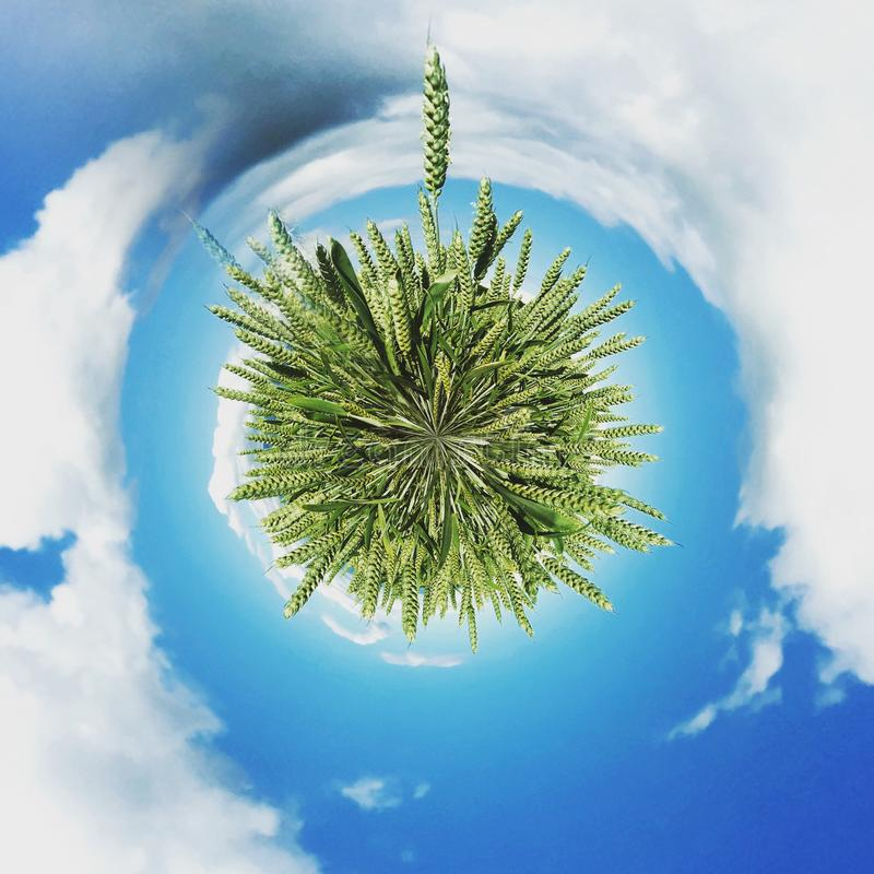 Abstract green wheat sphere stock image