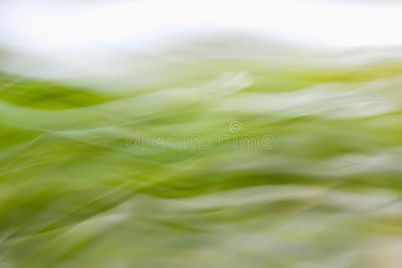Abstract green blured background stock photo
